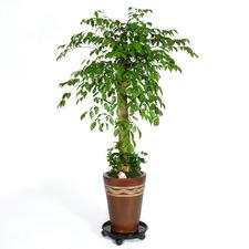 행복나무(happy tree)
